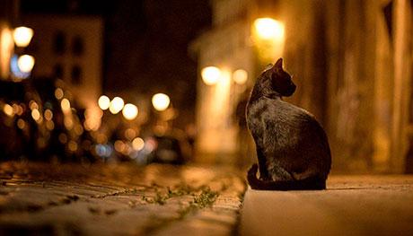 Gato en la calle por la noche